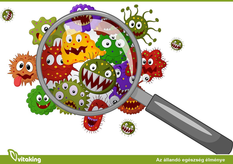 mit jelentenek a baktériumok