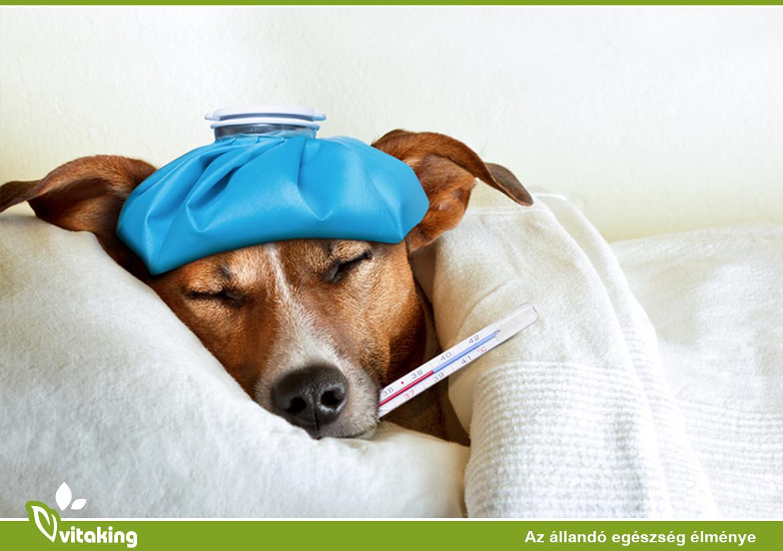 Influenza megelőzés természetesen