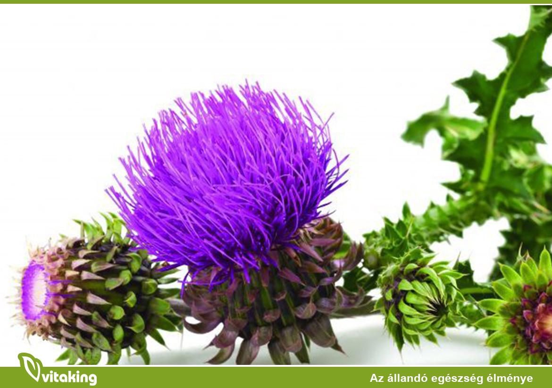 máj méregtelenítés gyógynövényekkel