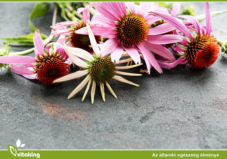 Az Echinacea előnyei és felhasználása